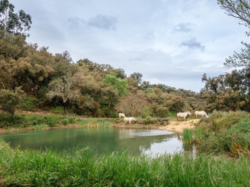 permaculture, volunteer, volunteering, voluntourism, voluntouring, volunteering, Gardening, Portugal, Alentejo, intentional community, eco-village